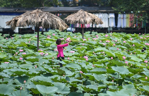 Lotus flower is present in Vietnamese culture and arts, especially in Buddhism and leaves its imprint in some historical architectures including One Pillar Pagoda, Buddha's pedestal and stylized decorative patterns.