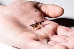 Trung Quốc chế tạo robot mini có thể thực hiện nhiệm vụ phức tạp
