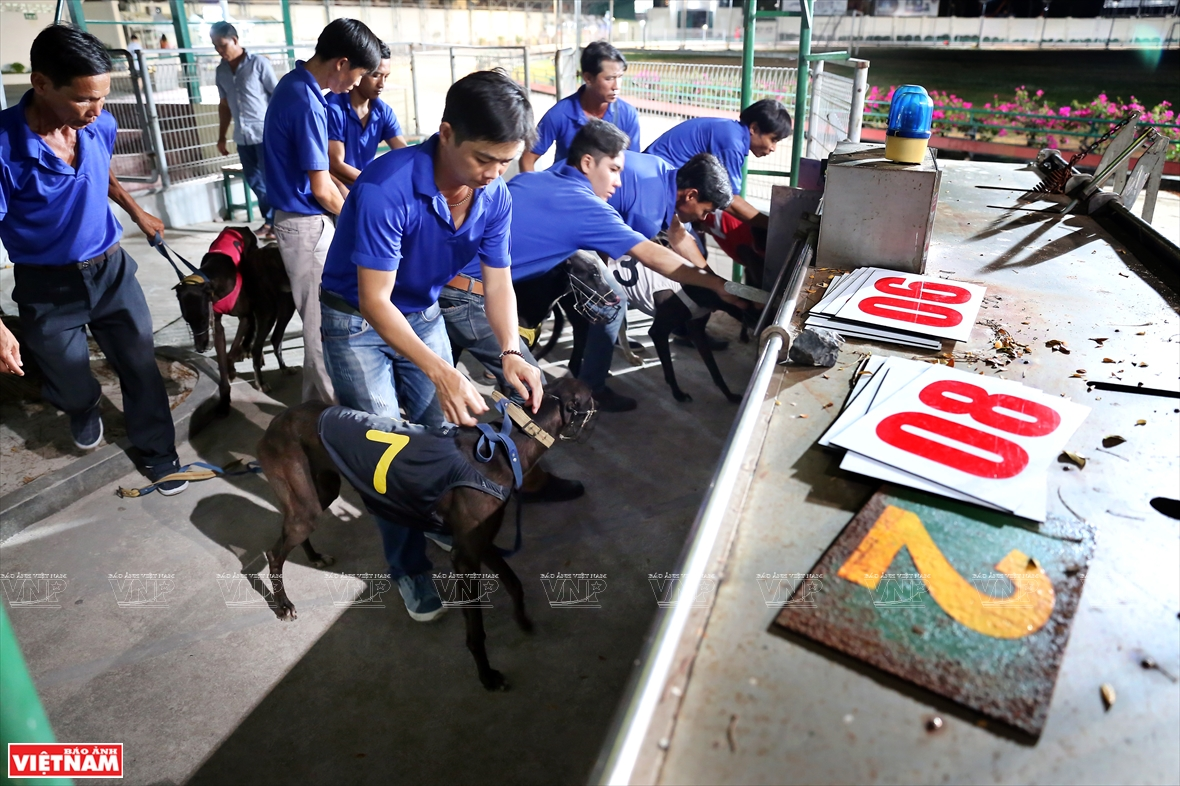 "The ""dog athletes"" are numbered from 1 to 8 (Photo: VNA)"