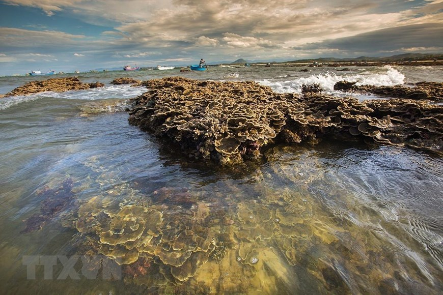 When the tides recede on the island, visitors are able to savour the scenic views of coral reefs on the land (Photo: VNA)