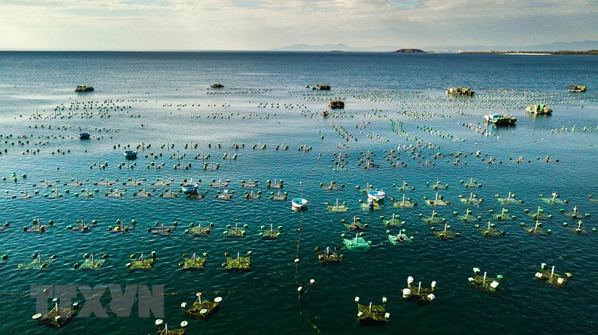 Lobster farming cages in Xuan Dai bay, Song Cau town (Photo: VNA)