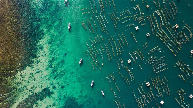 Phu Yen province's lobster farms are like neat rows of Xs on the emerald blue water (Photo: VNA)