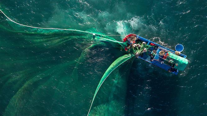 Fishermen from Phu Yen's An Hai village spread their net to catch anchovies