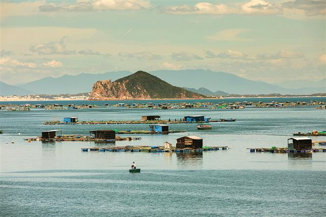 Floating homes with fish farms on Vung Ro Bay on a peaceful day (Photo: VNA)