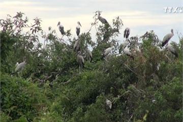 Farmer couple builds shelter for storks