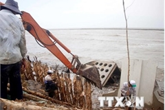Ca Mau sea dyke at risk of breaching