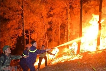 Forest fires engulf over 100 hectares