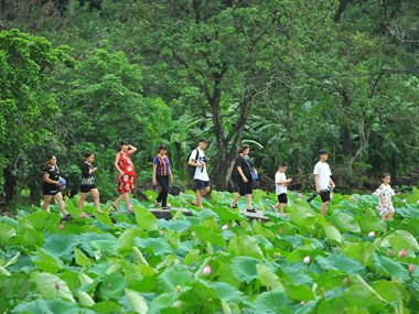 Vietnam among top five favourite places of Japanese tourists