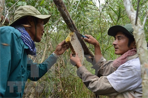 Ca Mau's special apiculture recognised as intangible cultural heritage