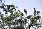 Exploring nine Ramsar sites of Vietnam