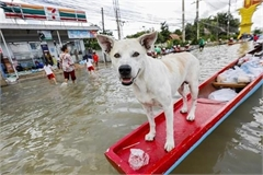 About 20,000 people evacuated in Thailand due to flooding