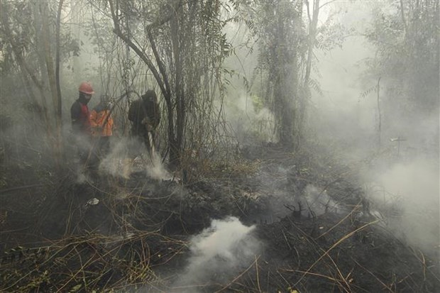 Malaysian government asks firms to control fires abroad hinh anh 1