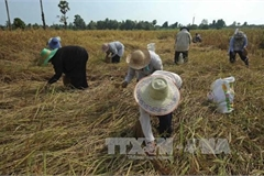 Thailand needs 100 billion THB to support rural economy