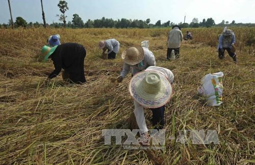 Thailand needs 100 billion THB to support rural economy hinh anh 1