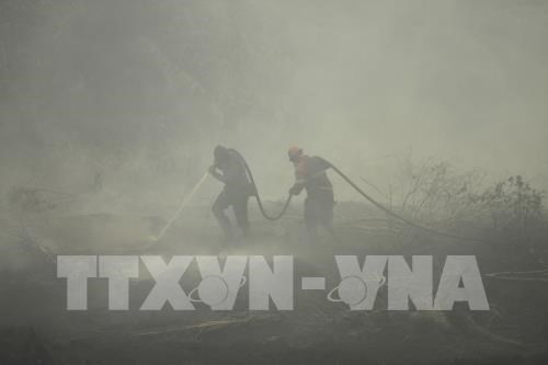 Indonesia mulls 113 million USD to tackle forest fires hinh anh 1