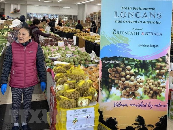 Long journey of Vietnamese fruits to Australia hinh anh 1