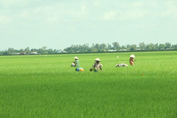 Mekong Delta may face more serious saline intrusion this dry season hinh anh 1