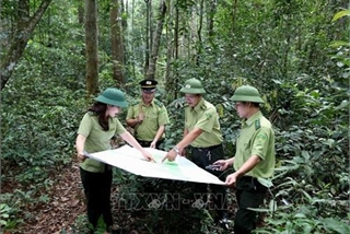 Vietnam to boost tourism development in protective forests