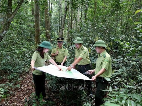 Vietnam to boost tourism development in protective forests hinh anh 1