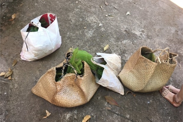 Binh Phuoc seizes rare civets transported from Cambodia