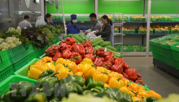 Vietnam targets 5 billion USD from fruit, vegetable exports in 2020 hinh anh 1
