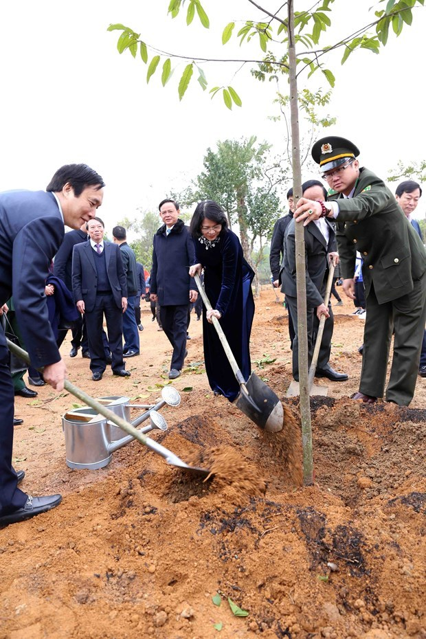 Vice President launches New Year tree-planting festival in Phu Tho hinh anh 1