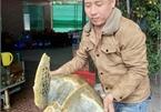 Nghe An man to set free 30kg sea turtle