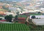 Lam Dong pilots building Vietnam's first green urban village