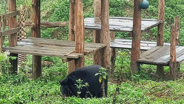 Ninh Binh bear sanctuary attractive to foreign tourists