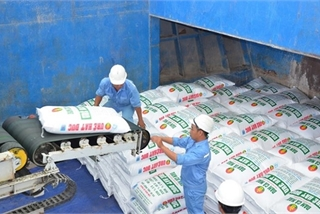 Company profit growth in VN to slow down in 2020: reports
