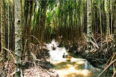 Forests in Ca Mau at high risk of fire