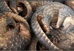 WWF urges end to wildlife trade, consumption in Asia-Pacific