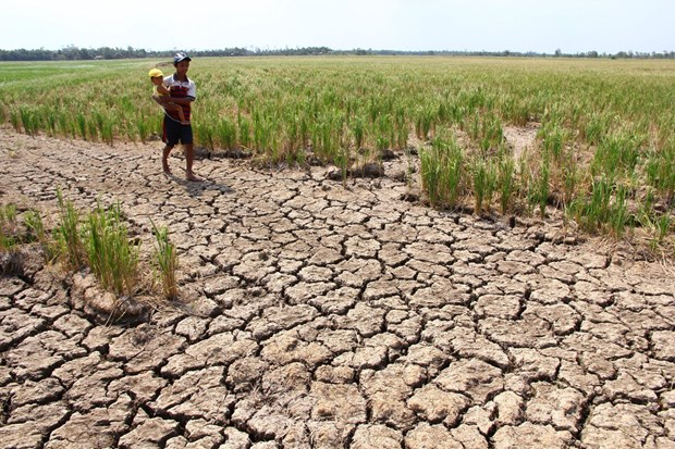 Central region at high risk of drought: official hinh anh 1