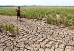 Central Vietnam at high risk of drought: official