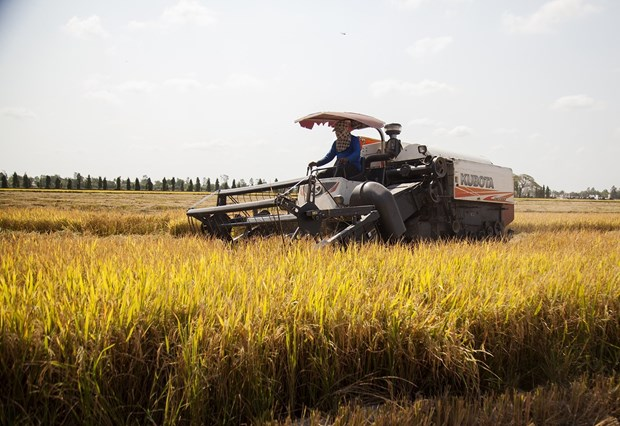 Rosy signs show bright prospect for rice export hinh anh 1