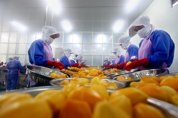 Vietnam calls for investment in fruit, vegetable processing hinh anh 1