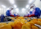 Vietnam calls for investment in fruit, vegetable processing