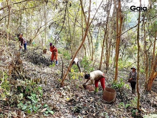 Nature reserve's seven ha of forested habitat for endangered species restored hinh anh 1