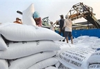 Ministry of Industry and Trade proposes resuming rice exports