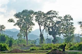 Vietnam helps Laos prepare for UNESCO recognition of national reserve