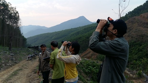 Strict patrol set for protection of endangered langurs from COVID-19 hinh anh 1