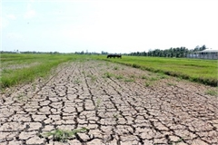 Ministry proposes US$22mil. to deal with salinity, drought