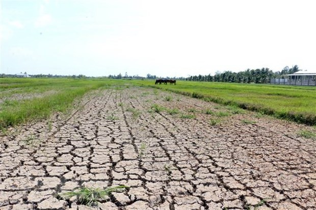 Ministry proposes over 515 billion VND to deal with salinity, drought hinh anh 1