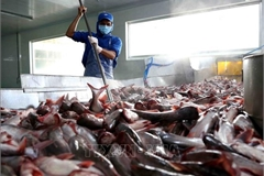 US cuts anti-dumping taxes on Vietnamese catfish products