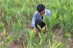 Specialised farming areas developed for climate change adaptation