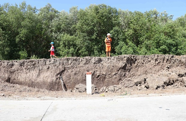 Ca Mau dyke network seeing severe subsidence hinh anh 1