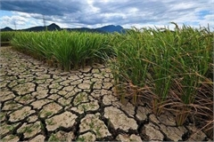 Binh Thuan declares Level 2 drought emergency