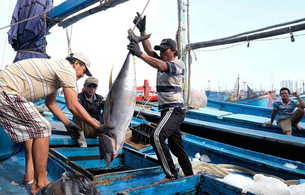 Ministry: China's suspension of fishing in Vietnam's waters meaningless hinh anh 1