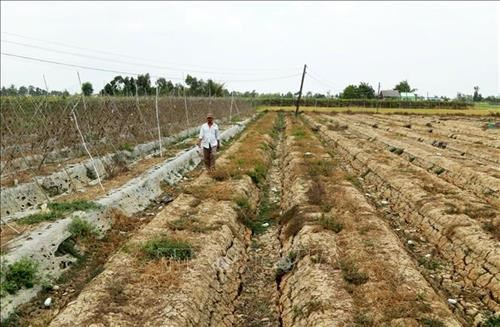 Mekong Delta province faces severe water shortage hinh anh 1