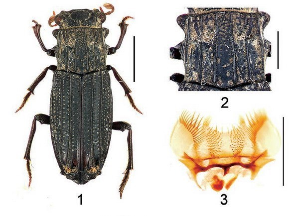New insects discovered in Vietnam hinh anh 1